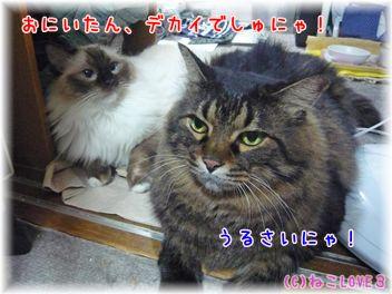 チビ&モモ5