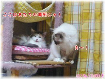 めい&モモ4