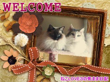 WELCOME めい&モモ