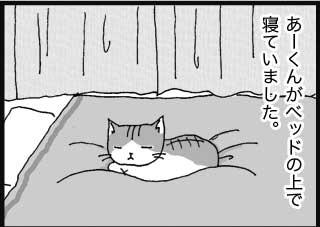 あーくんがベッドの上で寝ていました。