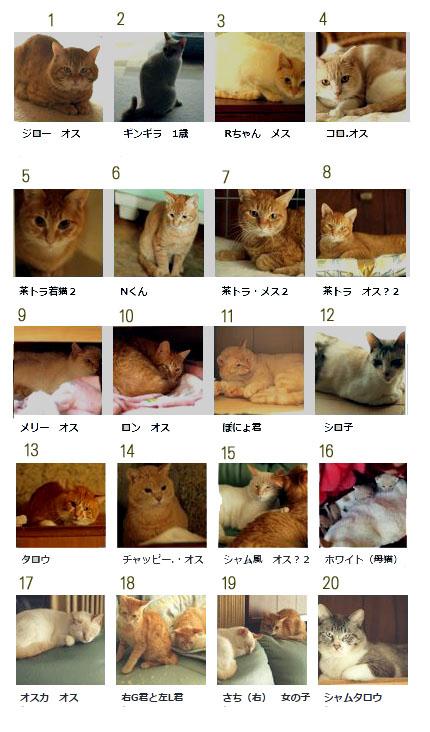 多頭飼いネコ 20匹画像のコピー