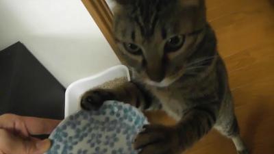 立ち食い猫.mp4.Still001