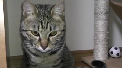 ネコに目薬1