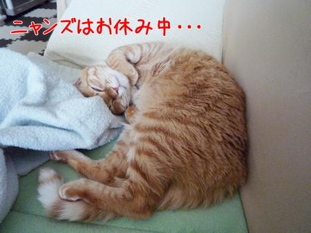 お休みちゅう・・・