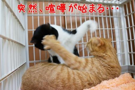 突然喧嘩!