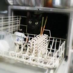 c121030黒猫
