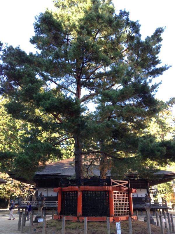 kouyasan5.jpg