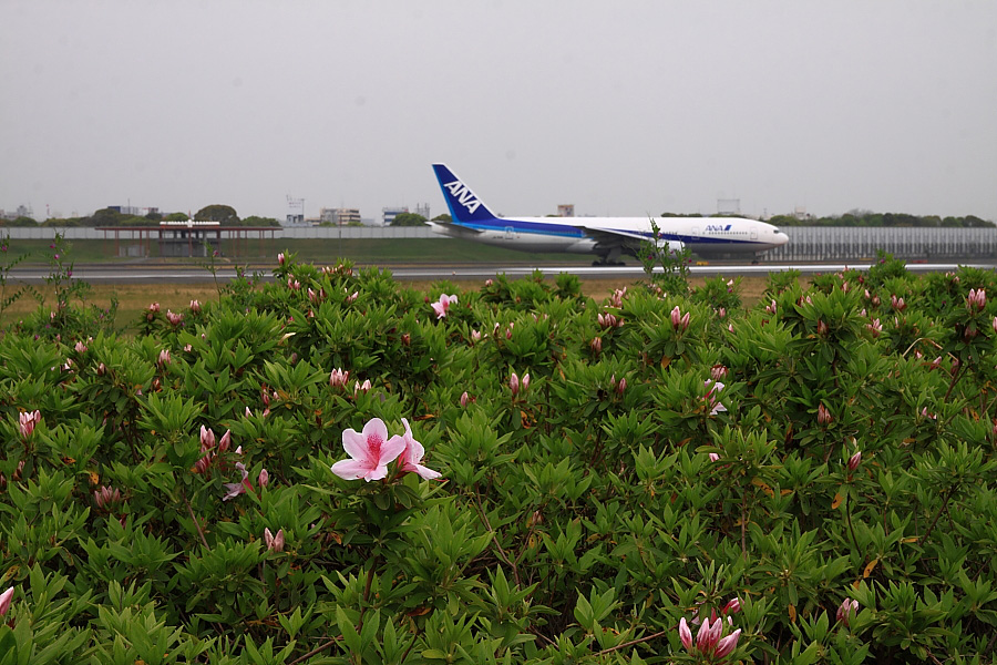 ツツジの花&ANA B777-281 ANA26@スカイランドHARADA(by EOS 50D with SIGMA 18-50mm F2.8 EX DC MACRO)