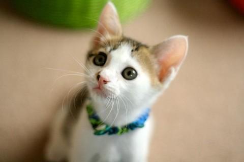 cat_37528_2.jpg