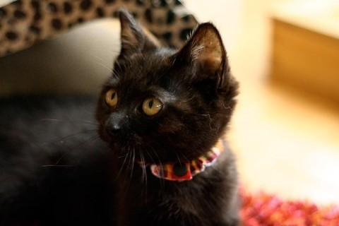 cat_38937_1.jpg