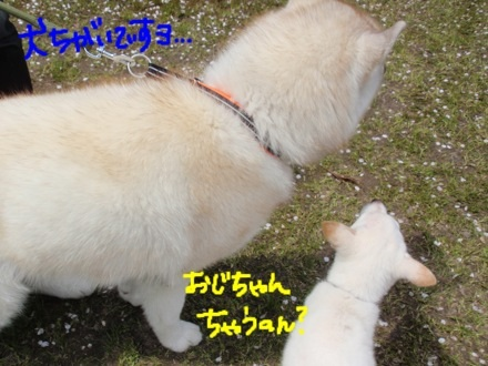 image_20130416220507.jpg