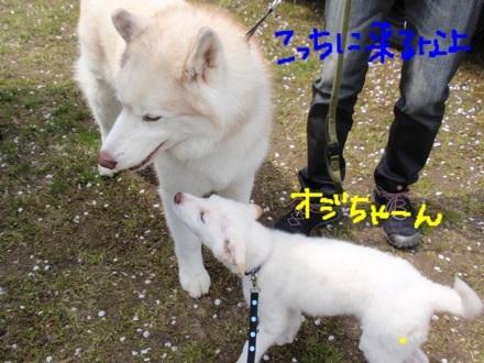image_20130416220538.jpg