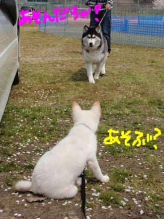 image_20130416220727.jpg
