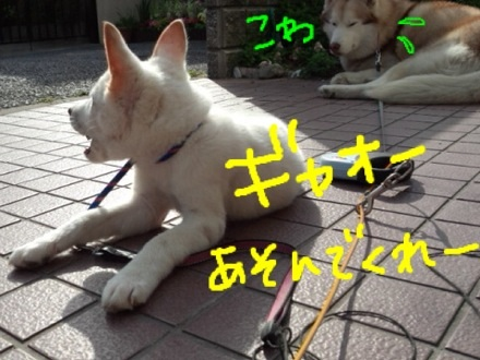 image_20130419000105.jpg
