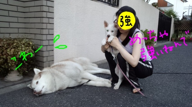 image_20130419234633.jpg