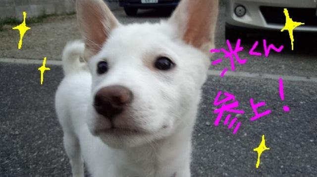 image_20130419235545.jpg