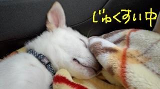 image_20130428004543.jpg