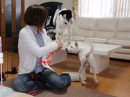 image_20130511214810.jpg