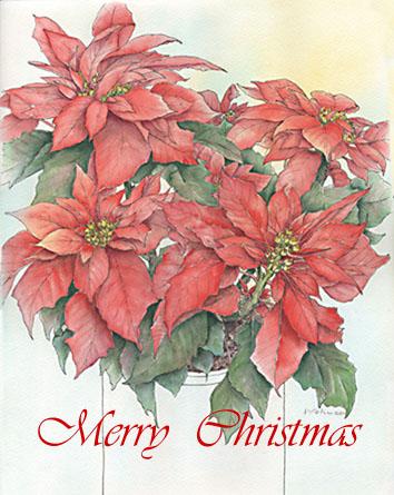 ポインセチア (クリスマス)