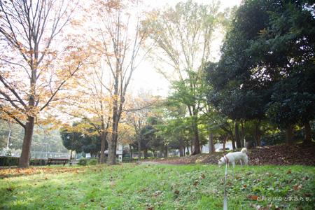 20121101-_MG_3789.jpg
