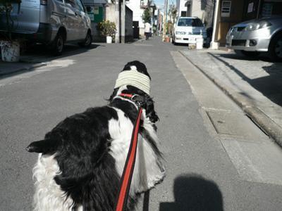本日もコッカー日和-近所