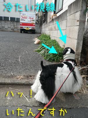 本日もコッカー日和-散歩の出会い