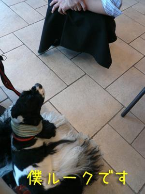 本日もコッカー日和-Dog cafe earth cafe