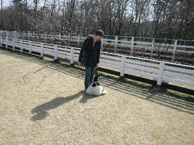 本日もコッカー日和-埼玉オフ会2010春