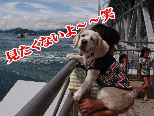 2012・09・16うず潮3