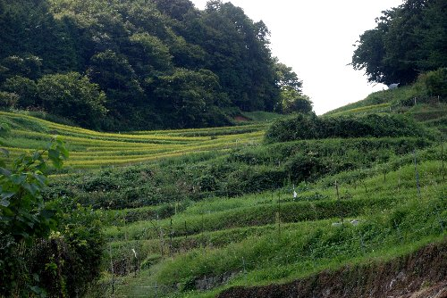 2012・09・22長谷棚田2