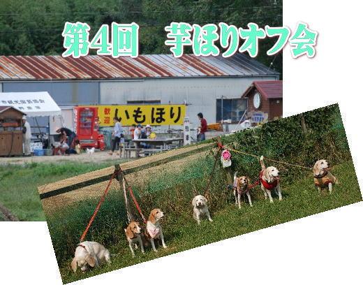 2012・10・07芋ほり1