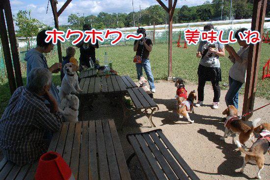 2012・10・07芋ほり10