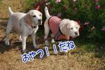 2012・11・03コスモス8