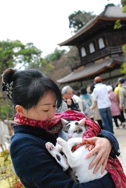 猫 銀閣寺