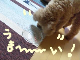 snap_norichisa_201270113236.jpg