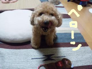 snap_norichisa_20127011359.jpg