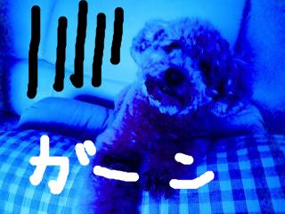 snap_norichisa_201272131032.jpg