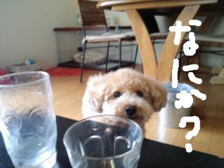 snap_norichisa_20127384050.jpg