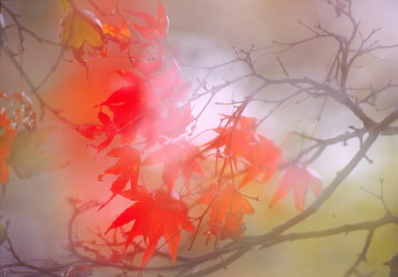 20121210_noririn.jpg