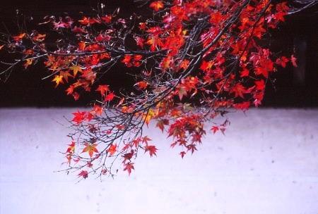 20121212_noririn.jpg