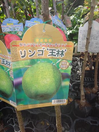リンゴ王林