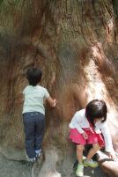 樹齢何百年の木