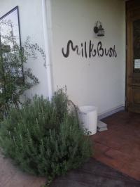 Milk Bush