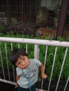タイガー(笑)