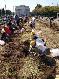 2012 芋掘り
