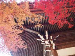 秋のお寺はなんとも言えない