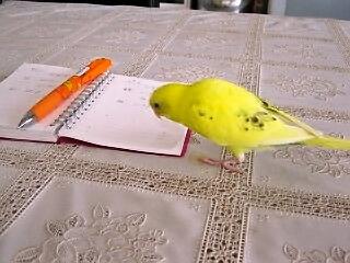 ぷくノートみる