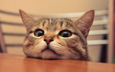 心理テスト猫