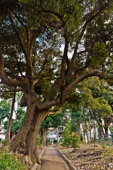 20111216naganumasansya05 (1 - 1)