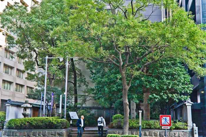 201111masakadotuka01 (1 - 1)